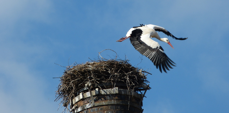 Storch_2015-04-07