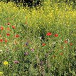 Natur- und Artenschutz im Technologiepark Ostfalen